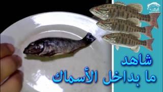 Download شاهد ما يوجد براس الاسماك وبداخل بطون الاسماك عند تنظيفها Video