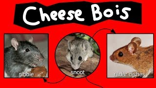 Download Cheese Bois Video