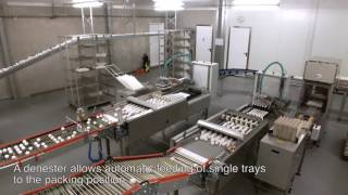 Download [EN] Egg packing and grading systems Video