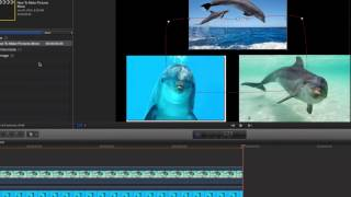 Download How To Make Pictures Move in Final Cut Pro X Video