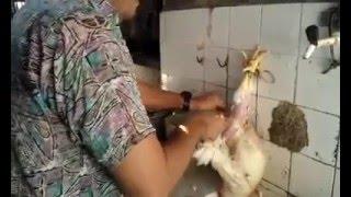 Download Depenando e limpando um frango em menos de 2 minutos Video