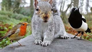 Download Videos for Cats to Watch - Birds and Squirrel Fun in December Video
