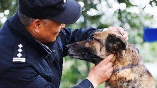 Download Chinese police officer sets up nursing home for retired police dogs Video
