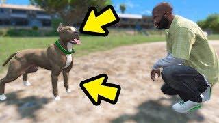 Download Novo Cachorro do Franklin um PITBULL!! GTA 5 Video