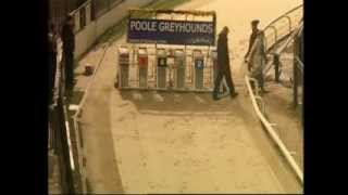 Download Poole Greyhounds Afghan Hound Race Video