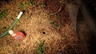 Download How to Destroy Wasp, Yellow Jacket Ground Nest Video - naturally using soap and water Video