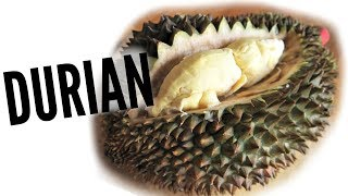 Download DURIAN Taste Test | FRUITY FRUITS Video