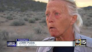Download Animals abandoned after drug bust in Tonopah Video