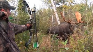 Download Moose Hunt With Couple Bow and Perfect Shot. HD Video