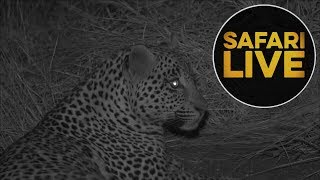 Download safariLIVE - Sunset Safari - July 16, 2018 Video