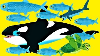Download Play Baby Games To Learn About Sea Animals - Explore The Ocean Fun Game For Children Video