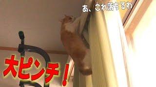 Download 【やばい】猫がカーテンの上に登ろうとしたら失敗して落ちた!! Video