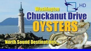 Download Oysters Washington Oyster Farm Taylor Shellfish Video