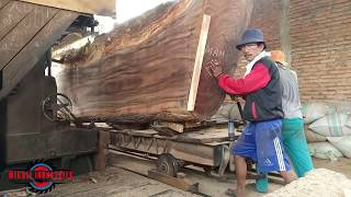 Download SAWING GIANT WOOD IN THE SAWMILL Video