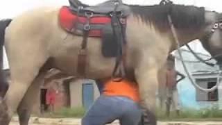 Download O cavalo e o bebado. Video