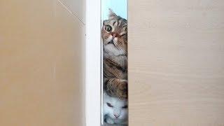 Download 고양이들을 진짜 흥분하게 만드는 순간 Video