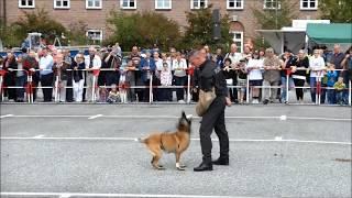 Download Was Polizeihunde alles können Video