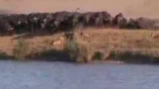 Download el mejor video de pelea de animales que he visto Video