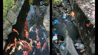 Download Japan vs India which country is more polluted ? Video