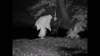 Download Unexplained trail camera video!!! Video
