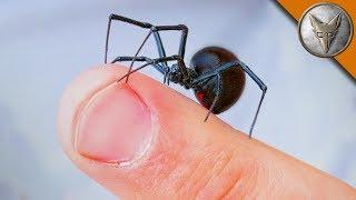 Download WILL IT BITE?! - Black Widow Challenge Video