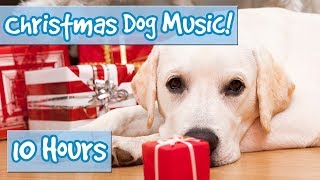 Download CHRISTMAS MUSIC FOR DOGS! Rudolph, Oh Christmas Tree, Joy to the World, Silent Night, Xmas for Dogs! Video