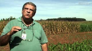 Download Época de plantio do milho Video