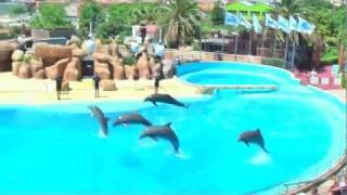 Download Delfin Show Barcelona Marineland Video