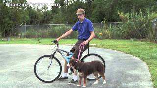 Download Changing Canines - Running Your Dog While Riding Your Bike Video