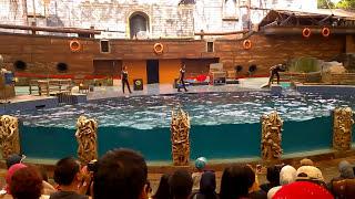 Download Atraksi Dolphins and Friends, Taman Safari Prigen, Taman Safari Indonesia 2 (Animal Full HD) Video
