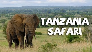 Download Tanzania Safari 2018 Video