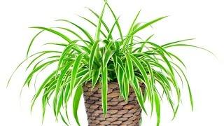 Download Самые полезные комнатные растения. Цветы для дома. Video