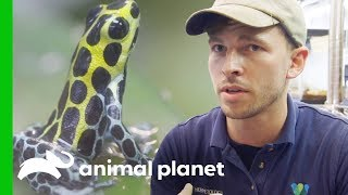Download Raising Poison Dart Frogs | The Zoo: From The Inside Video