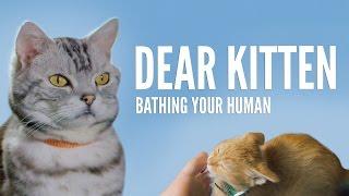 Download Dear Kitten: Bathing Your Human Video