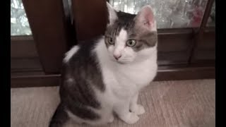 Download 【朝起きてうろうろしてはみたけれど結局自分の寝床で二度寝したのら】Wake up the cat sleeps in his own bed again. Video