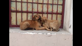 Download Street Dog Puppy Scared of humans Video
