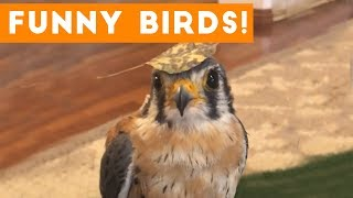 Download Funny Parrot & Bird Videos Weekly Compilation 2017   Funny Pet Videos Video