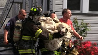 Download Dog Rescued by Firefighters from a House Fire. Caught on Camera! Totowa NJ Fire Dept Video