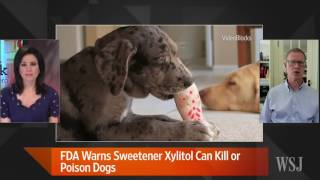 Download FDA: Sweetener Xylitol Can Kill or Poison Dogs Video