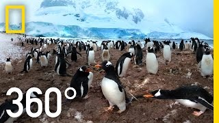 Download 360° Antarctica - Unexpected Snow | National Geographic Video