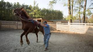 Download Taming Mustangs, Part 1 | A wild ride Video