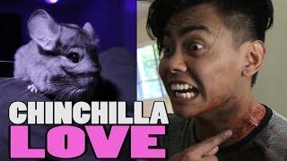 Download CHINCHILLA LOVE Video