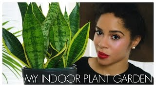 Download MY HOUSE PLANTS Video