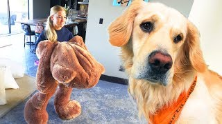 Download DOG TOY COMES TO LIFE! (Giant 6ft Teddy Bear) Video