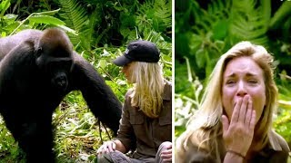 Download He Raised Gorilla, 6 Years Later, It Meets His Wife – Despite Warnings She Walks Too Close Video