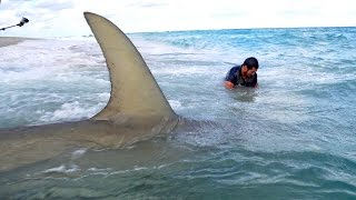 Download Monster Sharks caught Fishing from the Beach - 4K Video