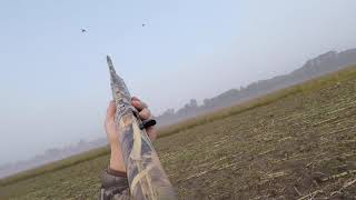 Download Limiting Out! | Dove Hunting Season Opener 2017 Video