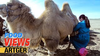 Download Drinking Camel's Milk - A Way Of Life In The Gobi | VIEWS Video