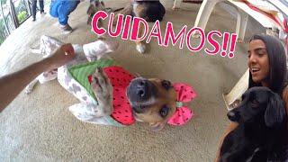 Download CUIDAMOS DE CACHORROS ABANDONADOS!! Video