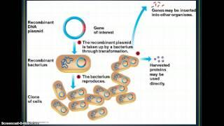Download Biotechnology - Cloning & Genetic Engineering Video